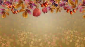 Reife Früchte des Herbsthintergrundes und gelb gefärbte Blätter stockbild