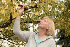Reife Frau, die oben Baum betrachtet Stockbild