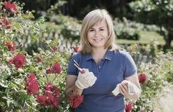 Reife Frau, die um roten Rosen sich kümmert Lizenzfreie Stockbilder