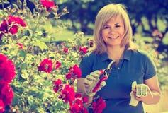 Reife Frau, die um roten Rosen sich kümmert Lizenzfreie Stockfotos
