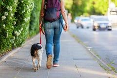 Reife Frau mit Bretagne-Hund auf einem Bürgersteig Stockfoto