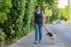 Reife Frau mit Bretagne-Hund auf einem Bürgersteig Stockbild