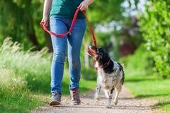 Reife Frau mit Bretagne-Hund an der Leine lizenzfreies stockbild