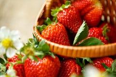 Reife frische Erdbeeren im Korb Stockfotos