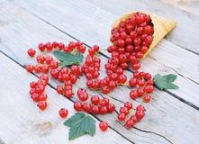 Reife frische rote Johannisbeeren im Eiscreme-Waffelkegel auf rustikalem hölzernem Hintergrund stockfotografie