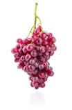 Reife Frucht der frischen Trauben der Gruppe Stockbilder