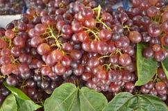 Reife Frucht der roten Traube mit grünen Blättern Lizenzfreie Stockbilder