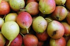 Reife Fruchtbirne harvestRipe Früchte des Birnenhintergrundes stockbild
