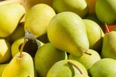 Reife gelbe und grüne Birnen im hellen Sonnenlicht Lizenzfreies Stockfoto