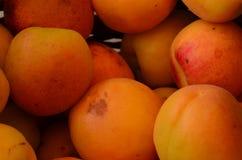 Reife geschmackvolle selbstgezogene Aprikosen Lizenzfreies Stockfoto