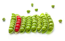 Reife grüne Erbsen und rote Johannisbeere Stockfotos