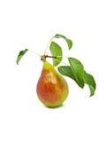 Reife helle Birne mit Blättern Lizenzfreies Stockbild