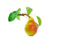 Reife helle Birne mit Blättern Lizenzfreie Stockfotografie