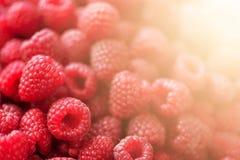 Reife Himbeeren Makro Selektiver Fokus Fruchthintergrund mit Kopienraum Sonniger Sommer und Beerenerntekonzept stockfoto
