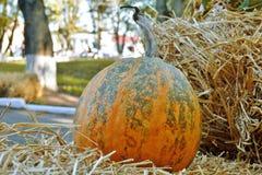 Reife Kürbise, die im Straßenfeiertag auf Halloween liegen lizenzfreie stockfotos