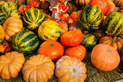 Reife Kürbise für Halloween Lizenzfreies Stockfoto