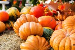 Reife Kürbise für Halloween Stockfotografie