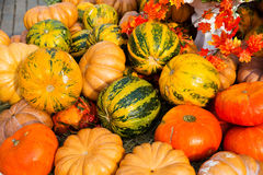 Reife Kürbise für Halloween Lizenzfreie Stockfotografie