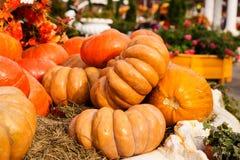 Reife Kürbise für Halloween Stockfotos