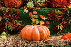 Reife Kürbise für Halloween Lizenzfreies Stockbild