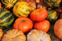 Reife Kürbise für Halloween Lizenzfreie Stockfotos