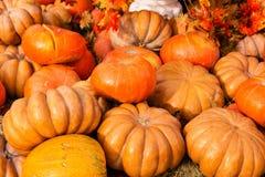 Reife Kürbise für Halloween Stockbilder