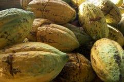 Reife Kakao- oder Kakaohülsen lizenzfreie stockbilder