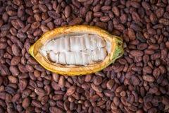 Reife Kakaohülse und -bohnen gründeten auf rustikalem hölzernem Hintergrund Lizenzfreie Stockfotos
