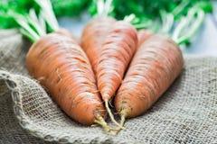 Reife Karotten Stockfotografie