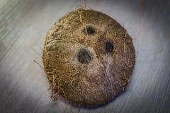Reife Kokosnuss auf dem Boden stockfoto