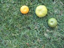 Reife Mandarinen im grünen Gras stockfotografie