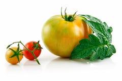 Reife nasse gelbe und rote Tomaten mit Blättern Stockbild