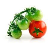 Reife nasse rote und grüne Tomaten getrennt auf Weiß Stockfotos