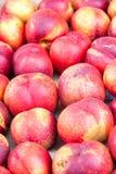 Reife Nektarinen für Verkauf am Gemüsemarkt im Sommer Stockbild