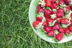 Reife organische Erdbeeren auf der Platte auf grünem Gras Stockfotografie