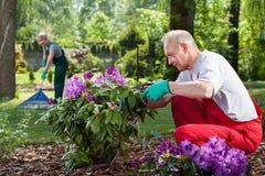 Reife Paararbeit im Garten Stockfoto