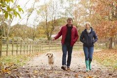 Reife Paare auf Autumn Walk With Labrador stockfotos