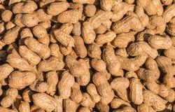 Reife rohe Erdnüsse mit Schale stockbild