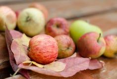 Reife rote Äpfel auf Holztisch Drei Äpfel auf Blättern Kürzlich geerntete Äpfel Lizenzfreie Stockfotografie