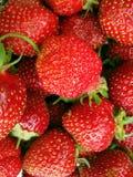 Reife rote Erdbeeren im natürlichen Hintergrund lizenzfreie stockfotografie