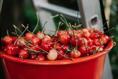 Reife rote Kirsche im Plastikbehälter Lizenzfreies Stockfoto