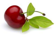 Reife rote Kirsche mit Stiel und Blatt lokalisiert stockfoto
