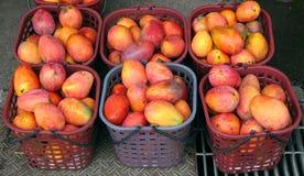 Reife rote Mangos für Verkauf Lizenzfreies Stockfoto