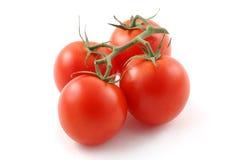 Reife rote Tomaten auf der Rebe. Lizenzfreies Stockfoto