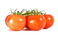 Reife rote Tomaten auf der Rebe Lizenzfreie Stockbilder