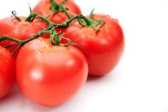 Reife rote Tomaten auf weißem Hintergrund Stockfotos