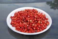 Reife rote Walderdbeeren liegen auf einer weißen Plastikplatte Stockfoto
