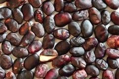Reife Samenbohnen auf einem hellen Hintergrund Stockbild
