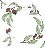 Reife schwarze Oliven lokalisiert auf weißem Hintergrund vektor abbildung