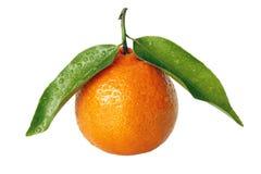 Reife Tangerine mit grünen Blättern Stockfoto